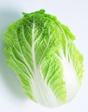 白菜的结构图